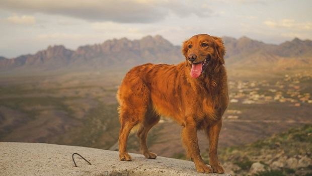 10 Most Common Dog Injuries On Hikes