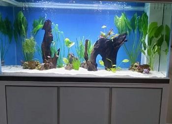 Aqua Dream Aquarium Fish Tank