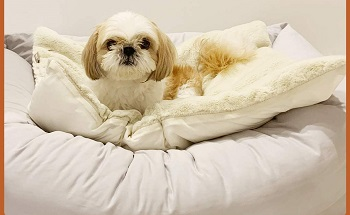 Arr Warm And Cool Dog Bed