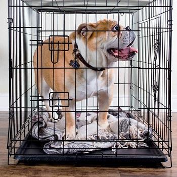BEST 36 X 22 DOG CRATE