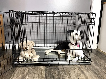 BEST 42 INCH METAL DOG CRATE TRAY