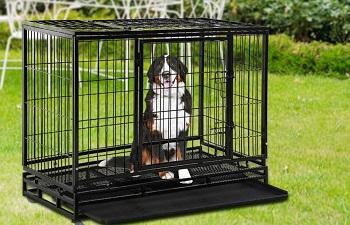 BEST INDOOR 48 INCH HEAVY DUTY DOG CRATE