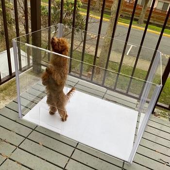 BEST INDOOR ACRYLIC DOG CRATE