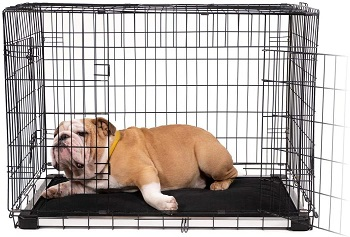 BEST METAL DOG CRATE PAD WASHABLE