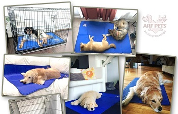 BEST OF BEST COOLING CRATE PAD