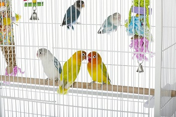 BEST PARAKEET LARGE WHITE BIRD CAGE