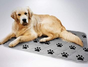 BEST-SMALL-WATERPROOF-DOG-CRATE-MAT
