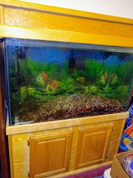BEST WITH A STAND GALLON TURTLE TANK