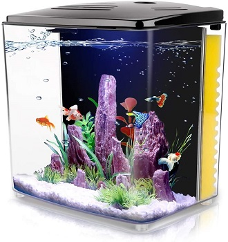 BEST WITH FILTER PLANTED GOLDFISH TANK