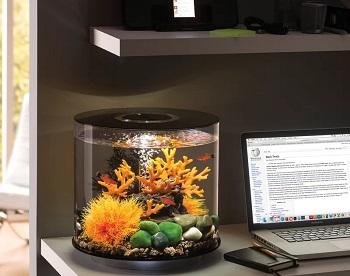 BiOrb Tube Aquarium