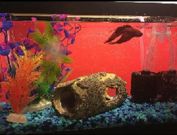 Carolina Biological Supply Company Aquarium