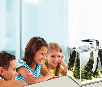 Cobalt Aquatics Aquarium