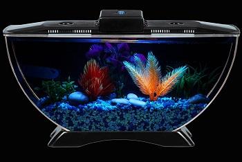 Koller Fish Tank