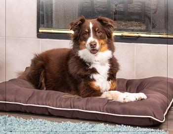 Pet Craft Supply Super Snoozer Bed
