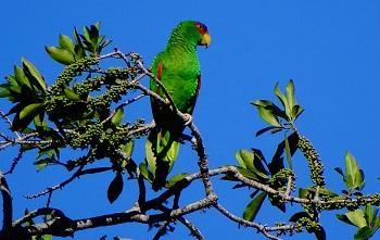 a bird on tree