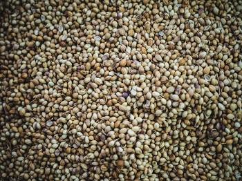 food seeds
