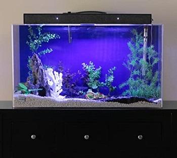 Advance Aqua Tanks Acrylic Rectangle Aquarium