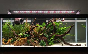 Aqueon Long Aquarium