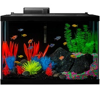 BEST DECORATION 20-GALLON TANK WITH LID summary