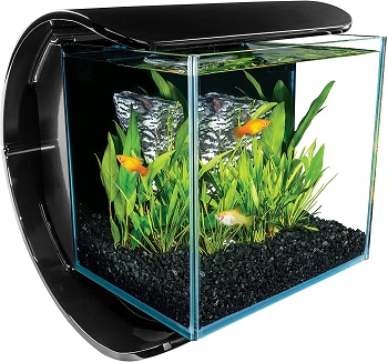 BEST DECORATION 3-GALLON GLASS FISH TANK