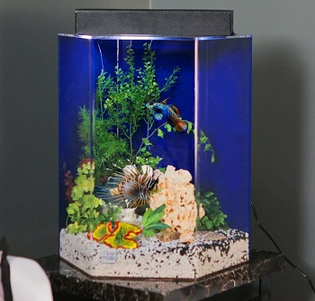 BEST PLANTED 20-GALLON FISH TANK WITH LID