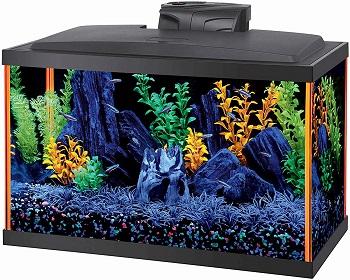 BEST PLANTED AMAZING FISH TANK