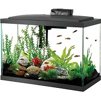 BEST WITH FILTER 20-GALLON CICHLID TANK summary