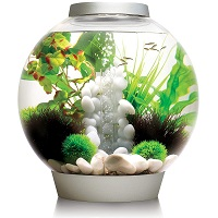 BEST WITH FILTER 3-GALLON FISHBOWL summary