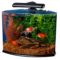BEST WITH FILTER TETRA CRESCENT KIT summary