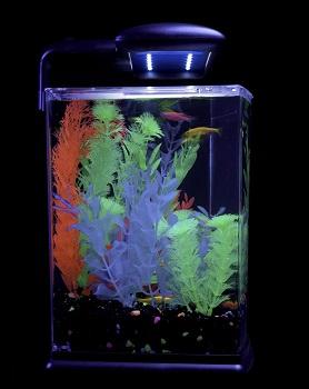 GloFish Crescent Aquarium Kit
