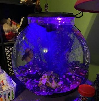 Imagitarium Freshwater Globe Kit