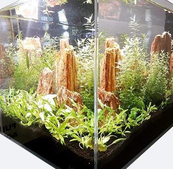 Lifegard Aquatics Crystal Aquarium