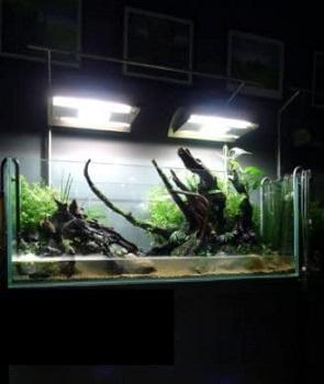 STRELLALAB Landen Low Iron Aquarium