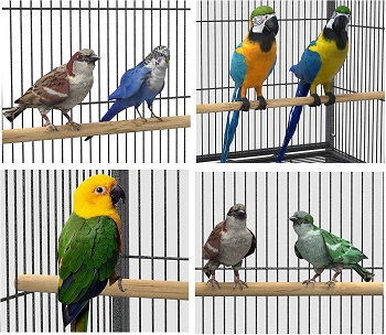 Yinatech 53-in Bird Cage