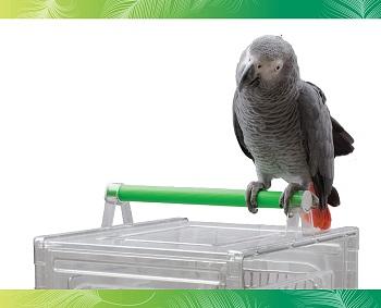BEST COCKATIEL SMALL BIRD TRAVEL CAGE