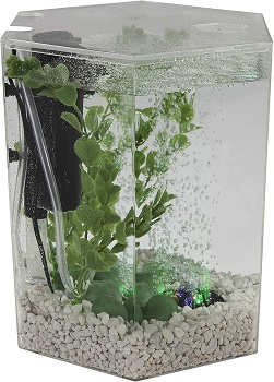 BEST OF BEST SMALL CHEAP FISH TANK