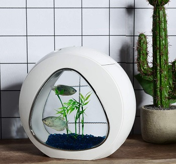 BEST PLANTED 1 GALLON FISHBOWL