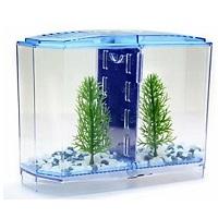 BEST PLANTED BLUE FISH TANK summary