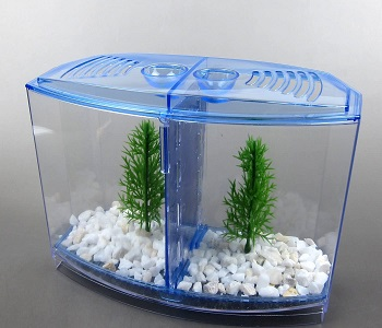 BEST PLANTED BLUE FISH TANK