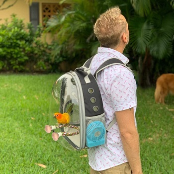 BEST SMALL BIRD BACKPACK WITH PERCH