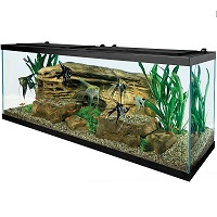 BEST WITH FILTER DISCUS COMMUNITY TANK summary
