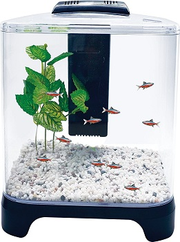 BEST WITH FILTER SMALL CHEAP FISH TANK