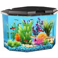 BEST WITH FILTER SMALL HERMIT CRAB TANK summary