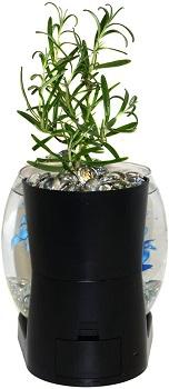 Elive Fish Bowl