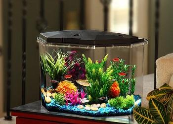 Koller Product Aquarium Kit