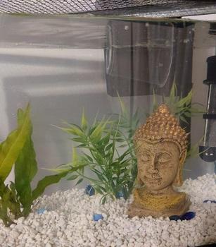 Penn-Plax Standing Buddha Ornament