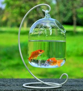 RuiyiF Desk Hanging Fish Tank