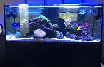 SC Aquariums Starfire Aquarium