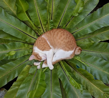 cat and plants