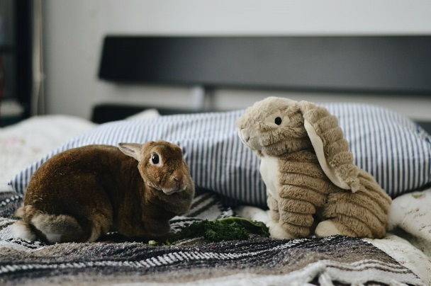 rabbit and toys
